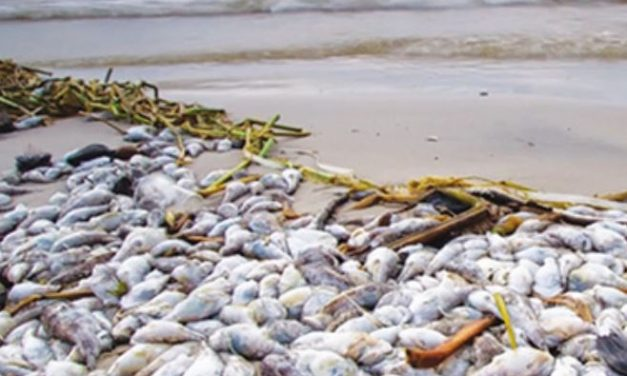 Co Blamed for Vietnamese Environmental Disaster Awarded ISO 9001